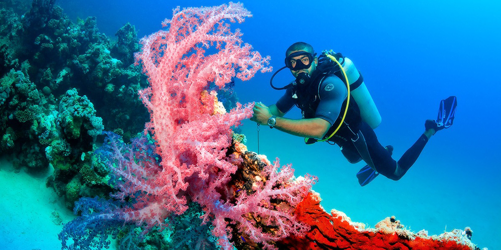Diving in Hurghada - Trips in Egypt