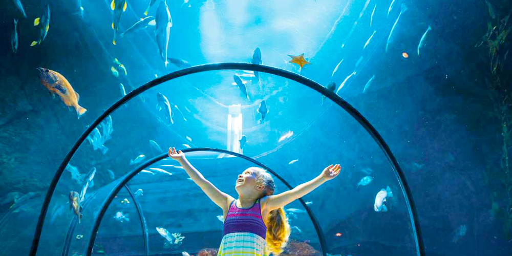 Grand Aquarium of Hurghada - Hurghada city Tour - Trips in Egypt