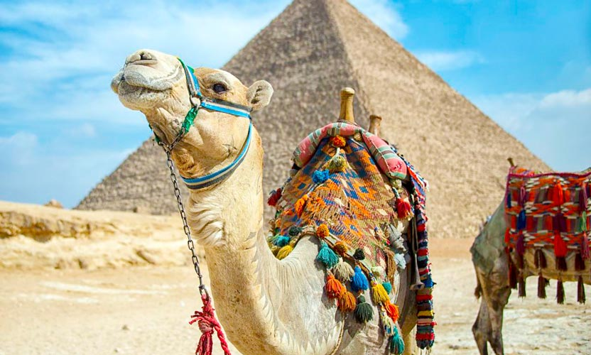 Tour to Pyramids from Port Said - Pyramids Tour from Port Said