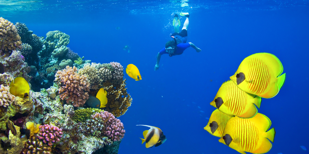 Best Time To Visit Marsa Alam - Trips in Egypt