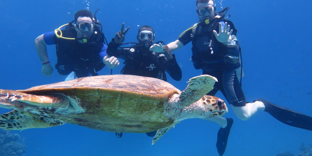 Diving Tours El Gouna - Trips in Egypt