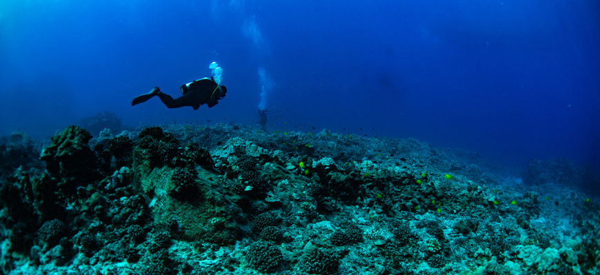 Diving in Red sea | Scuba Diving from EL Gouna | TripsInEgypt