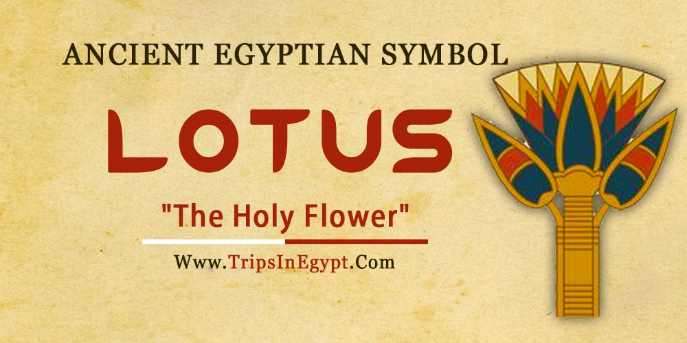 Ancient Egyptian Symbol Lotus - Trips in Egypt
