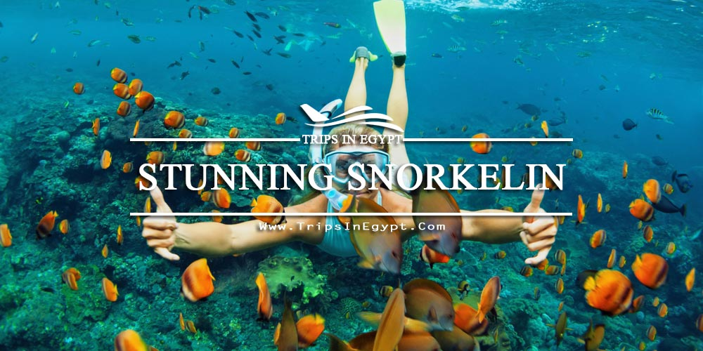 Snorkeling Red Sea - Egypt Red Sea Tours - Trips in Egypt