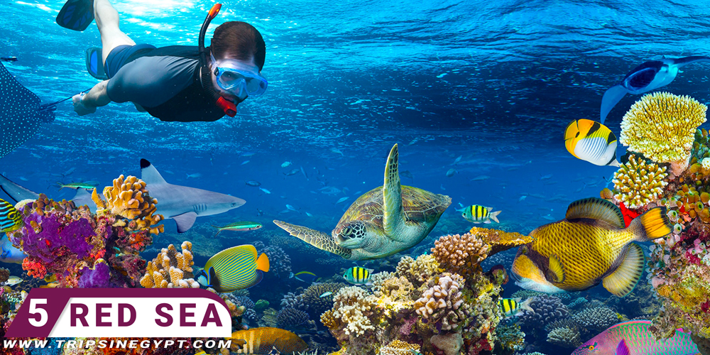 Red Sea - Egypt Tour Packages from Oman - Trips in Egypt