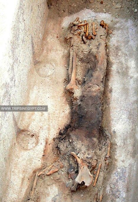 Queen Shesheshet Mummy - Trips in Egypt
