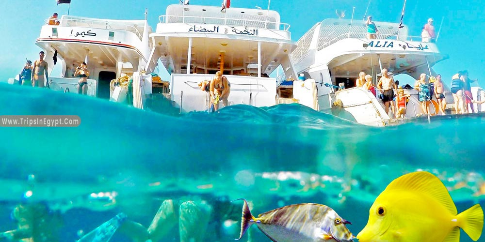 Giftun Island  Hurghada - Things to Do in Hurghada - Trips in Egypt