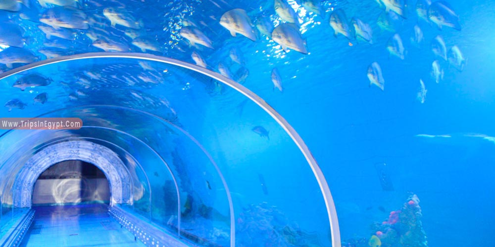 Grand Aquarium Hurghada  - Things to Do in Hurghada - Trips in Egypt