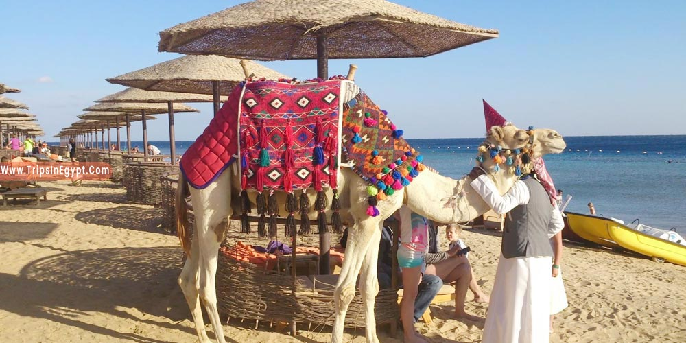 Makadi Bay Tourism - Trips in Egypt