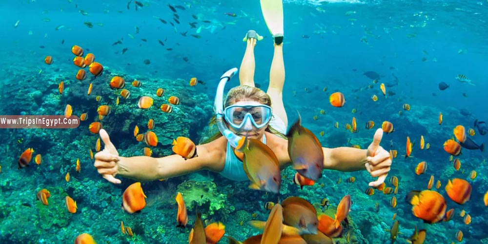 Things to Do in Makadi Bay - Trips in Egypt