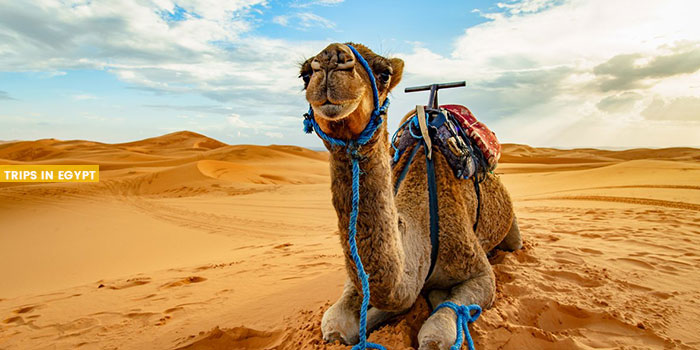 Camel Ride - Things to Do in Sharm El Sheikh - Trips in Egypt