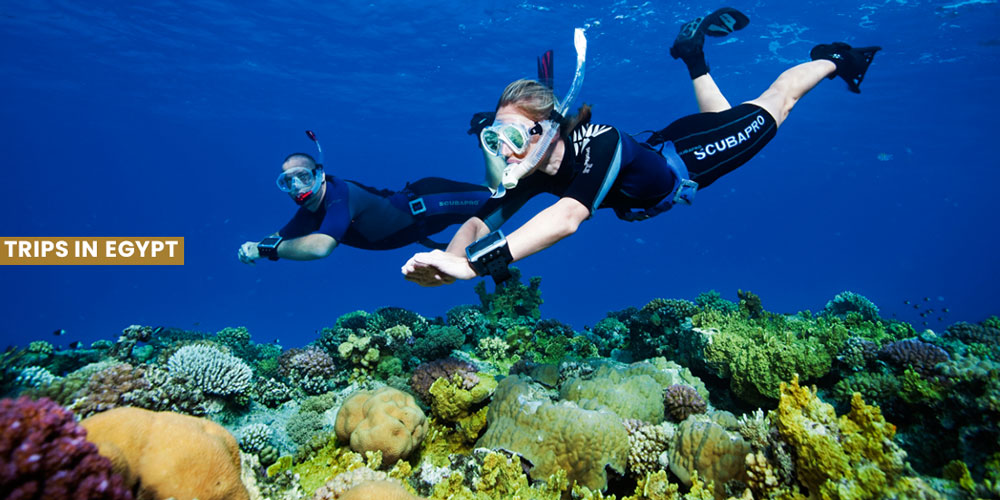 Diving - Things to Do in Marsa Alam - Trips in Egypt