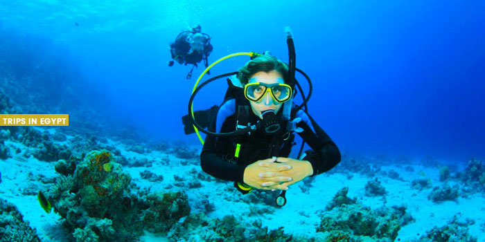 Diving - Things to Do in Sharm El Sheikh - Trips in Egypt