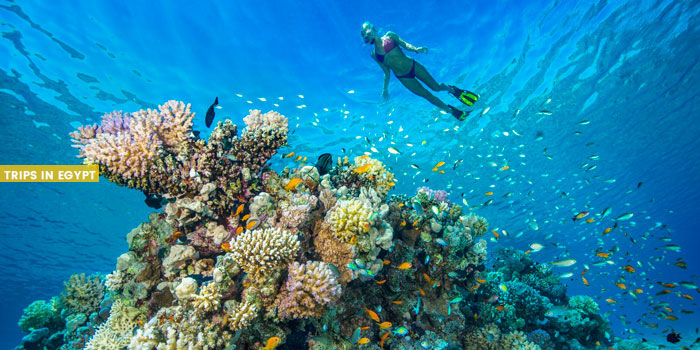 Gardens Dive Site - Things to Do in Sharm El Sheikh - Trips in Egypt