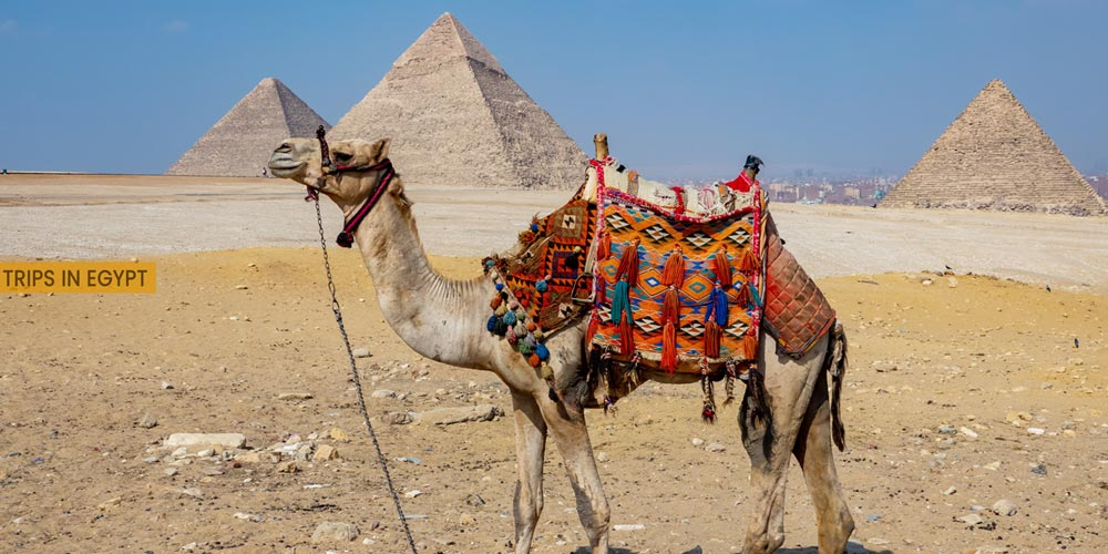 Giza Pyramids - Outdoor Activities to Do from Marsa Alam - Trips in Egypt