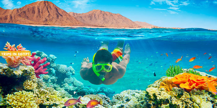 Nabq Protectorate - Things to Do in Sharm El Sheikh - Trips in Egypt