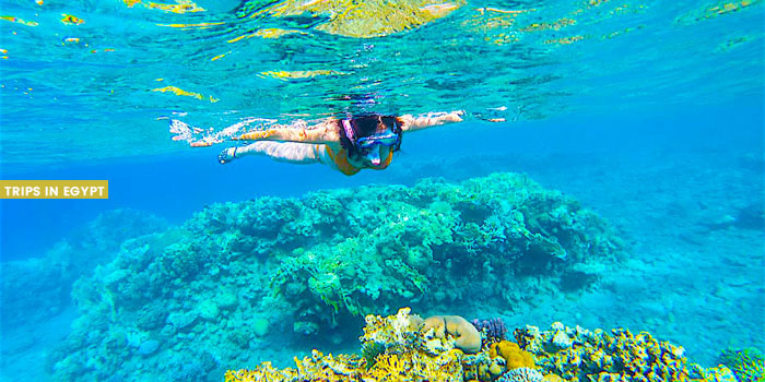 Snorkeling - Things to Do in Sharm El Sheikh - Trips in Egypt
