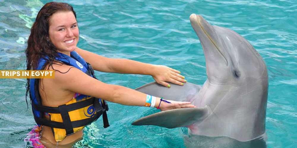 Swim with Dolphins - Things to Do in Marsa Alam - Trips in Egypt