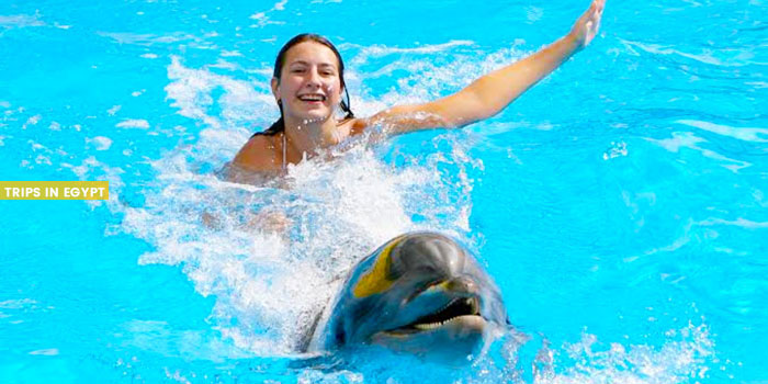 Swimming with Dolphins - Things to Do in Sharm El Sheikh - Trips in Egypt