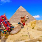 6 Days Cairo, Alexandria, Luxor & Abu Simbel Vacation - Trips in Egypt
