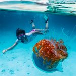 Private Snorkeling Trip from Sharm El Sheikh - Trips in Egypt