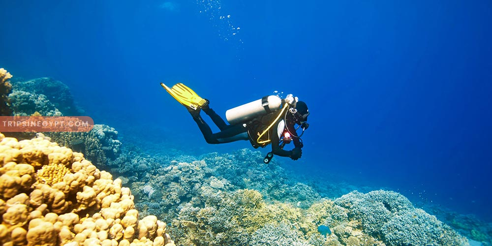 Scuba Diving - Best Tours & Places to Visit from El Gouna - Trips In Egypt